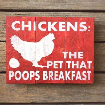 Chickens the pet that poops breakfast - DIY DECORATION -  Chickens the pet pooping breakfast   anim